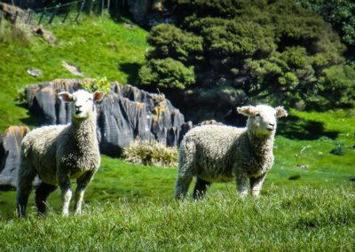 Reise - Neuseeland 10