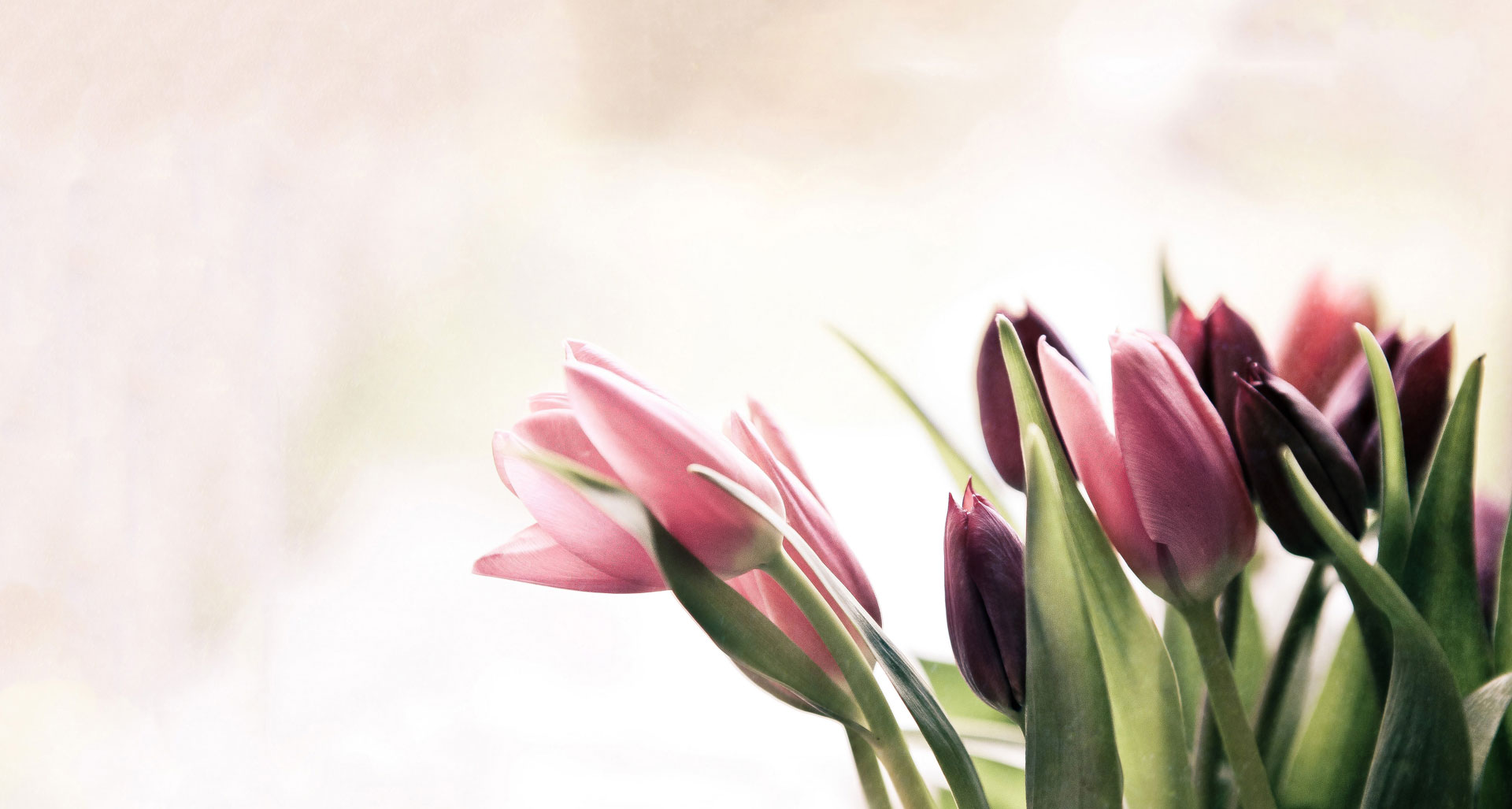 Neue Website – Blumenladen am Friedhof Villingen